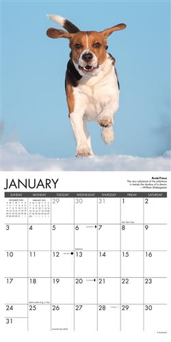 Beagle Rules 2021 Wall Calendar
