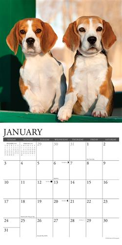 Beagles 2021 Wall Calendar