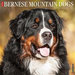 Bernese Mountain Dogs 2021 Wall Calendar