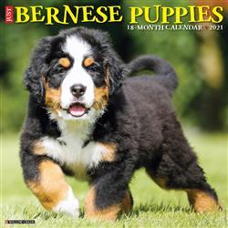 Bernese Mountain Puppies 2021 Wall Calendar