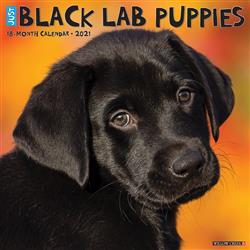 Black Lab Puppies 2021 Wall Calendar
