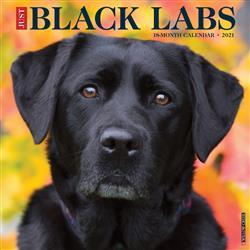 Black Labs 2021 Wall Calendar