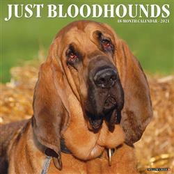 Bloodhounds 2021 Wall Calendar
