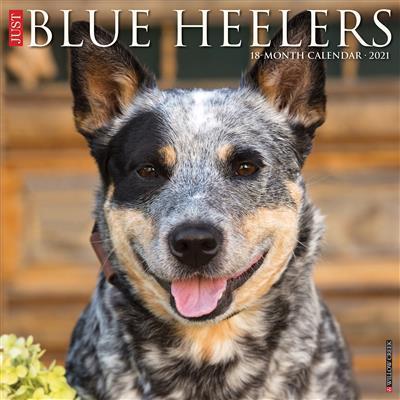 Blue Heelers 2021 Wall Calendar