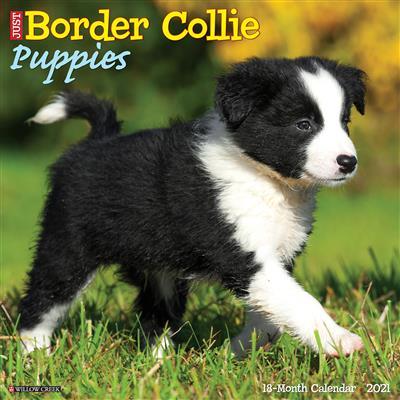 Border Collie Puppies 2021 Wall Calendar