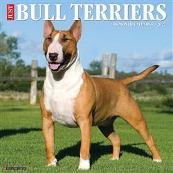 Bull Terriers 2021 Wall Calendar