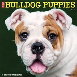 Bulldog Puppies 2021 Wall Calendar