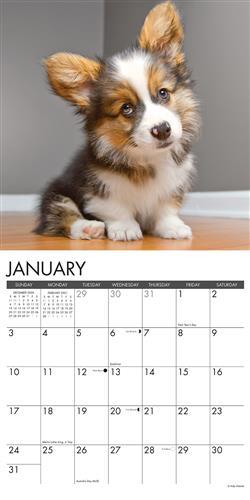 Corgi Puppies 2021 Wall Calendar