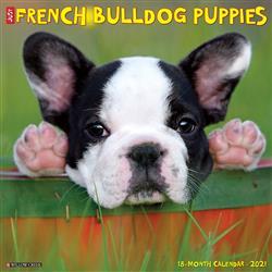 French Bulldog Puppies 2021 Wall Calendar
