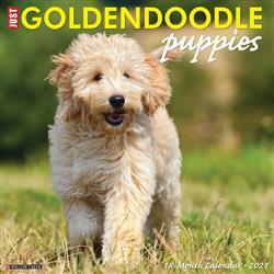 Goldendoodle Puppies 2021 Wall Calendar