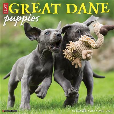 Great Dane Puppies 2021 Wall Calendar