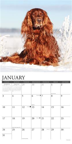 Irish Setters 2021 Wall Calendar