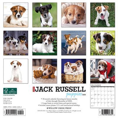 Jack Russell Puppies 2021 Wall Calendar