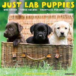 Lab Puppies 2021 Wall Calendar