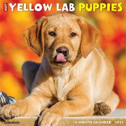 Yellow Lab Puppies 2021 Wall Calendar