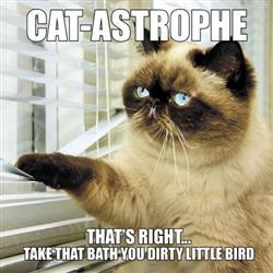 Cat-Astrophe - Book
