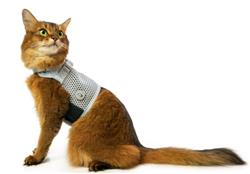 Martingale Cat Harness