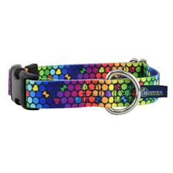 5/8″ and 1″ EarthStyle ROY G BIV Rainbow Dog Collars & Leads