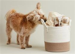 Welcome Home Pet Bundle