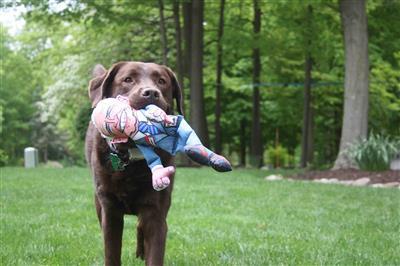 "Joe Large Dog Toy - 17"" Presidential Parody"
