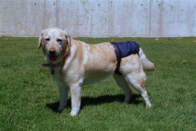 SnuggEase Washable Washable Dog Diaper