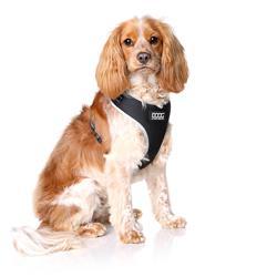 Neoflex Soft Dog Harness -LASSIE