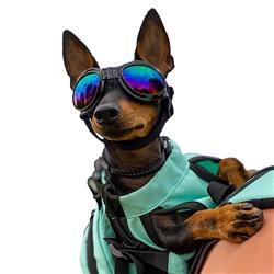 K9 Sport Shades - Dog Goggles
