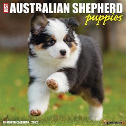 Australian Shepherd Puppies 2022 Wall Calendar