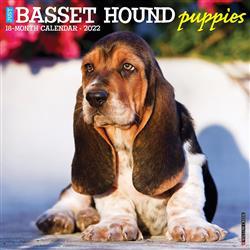 Basset Hound Puppies 2022 Wall Calendar