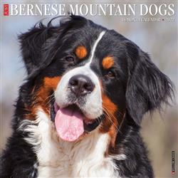 Bernese Mountain Dogs 2022 Wall Calendar
