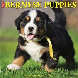 Bernese Mountain Puppies 2022 Wall Calendar