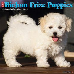 Bichon Frise Puppies 2022 Wall Calendar