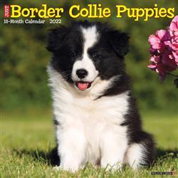 Border Collie Puppies 2022 Wall Calendar