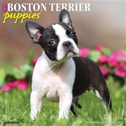 Boston Terrier Puppies 2022 Wall Calendar
