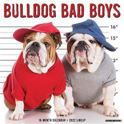 Bulldog Bad Boys 2022 Wall Calendar