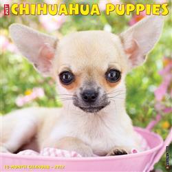 Chihuahua Puppies 2022 Wall Calendar