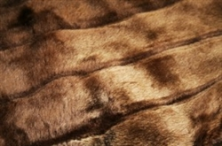 Caramel Cocoa Tiger Dreamz Luxury Mat Beds