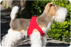Red Pure & Simple Step-In Harnesses