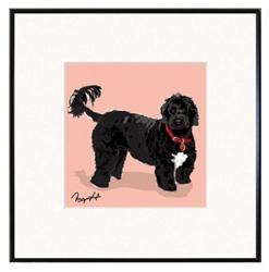 Framed Print: Portuguese Water Dog