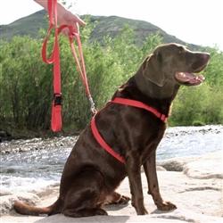 Hemp Dog Harness RED CORDUROY