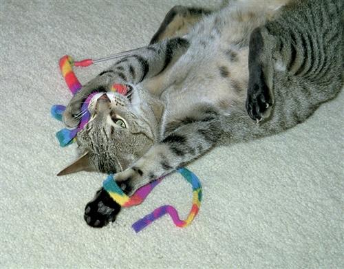 "Cat Dancer Cat Charmer - Special Xmas ""Stocking Stuffer"" Edition"