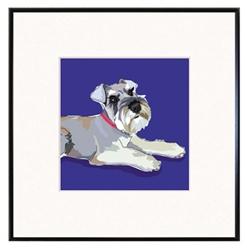 Framed Print: Schnauzer, Floppy Ears #2
