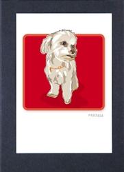 Maltese Sitting - Grrreen Boxed Note Cards