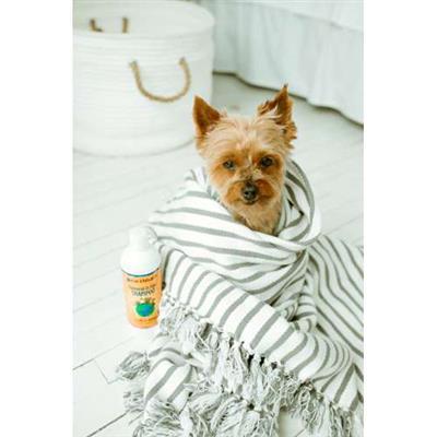 earthbath® Oatmeal & Aloe Shampoo, Vanilla & Almond, Helps Relieve Itchy Dry Skin, Made in USA, 16 oz