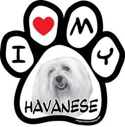 Paw Face Magnets - Havanese