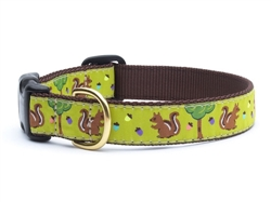 Nuts Dog Collar