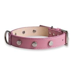 Spotlight Pink