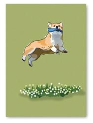 Birthday: Corgi Jumping