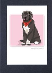 Newfoundland Sitting - Grrreen Boxed Note Cards