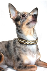 Diamond Winston Collars & Leads